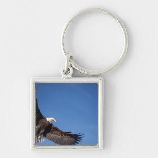 águila calva, leucocephalus del Haliaeetus, en vue Llavero Cuadrado Plateado