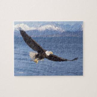 águila calva, leucocephalus del Haliaeetus, en vue Rompecabeza Con Fotos