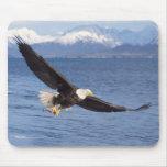 águila calva, leucocephalus del Haliaeetus, en vue Tapete De Raton