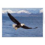 águila calva, leucocephalus del Haliaeetus, en vue Tarjeta De Felicitación