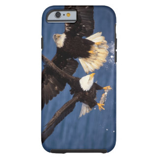 águila calva, leucocephalus del Haliaeetus, Funda De iPhone 6 Tough