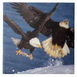 águila calva, leucocephalus del Haliaeetus, sacand Tejas Cerámicas