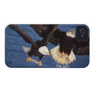 águila calva, leucocephalus del Haliaeetus, sacand iPhone 4 Case-Mate Fundas