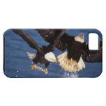 águila calva, leucocephalus del Haliaeetus, sacand iPhone 5 Case-Mate Coberturas