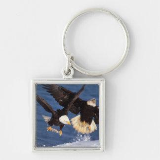 águila calva, leucocephalus del Haliaeetus, sacand Llavero Cuadrado Plateado