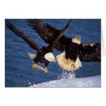 águila calva, leucocephalus del Haliaeetus, sacand Felicitación