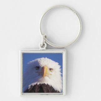 águila calva, leucocephalus del Haliaeetus, tiro p Llavero Cuadrado Plateado