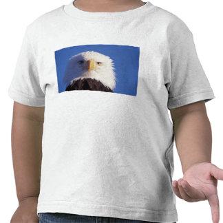 águila calva, leucocephalus del Haliaeetus, tiro Camisetas