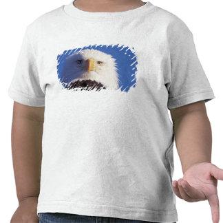 águila calva, leucocephalus del Haliaeetus, tiro Camiseta