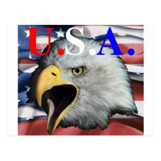 águila calva los E.E.U.U. Tarjeta Postal
