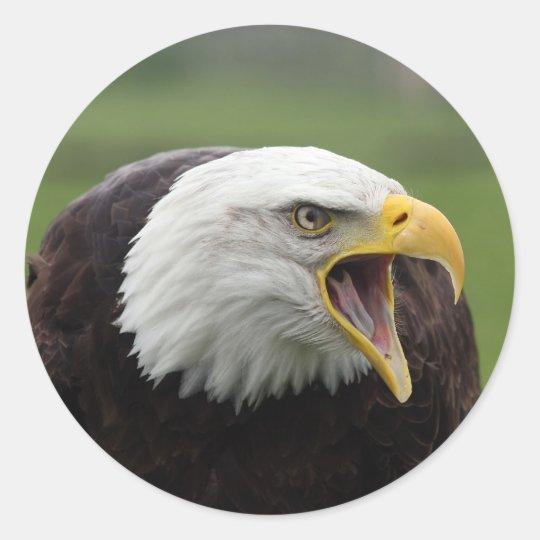 águila calva pegatina redonda