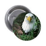 águila calva pin