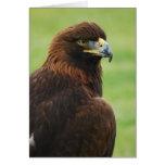 águila de oro felicitaciones
