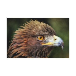 Águila de oro lienzo envuelto para galerías