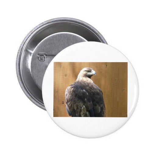 águila de oro pins