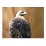 águila de oro postales