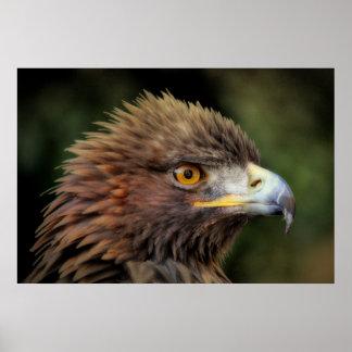 Águila de oro póster