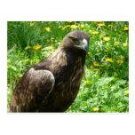águila de oro tarjetas postales