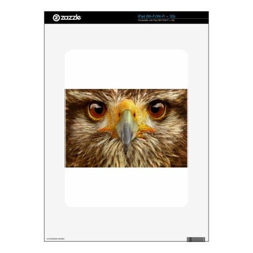 águila iPad calcomanías