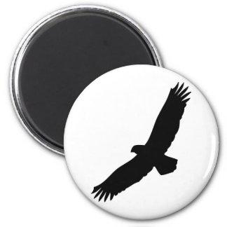 águila negra del vuelo iman