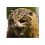 águila owl.jpg postal
