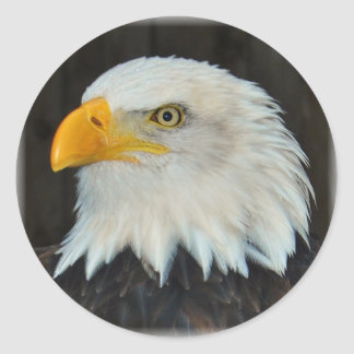 águila pegatina redonda