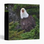 águila que grita