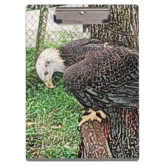 águila que mira abajo de bosquejo de la perca