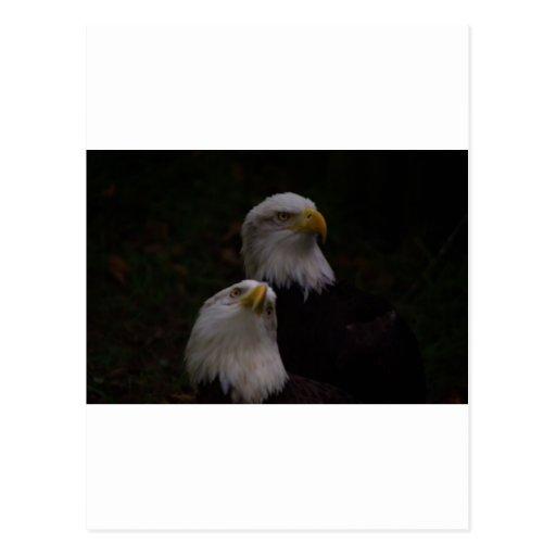 águilas americanas 2 postal