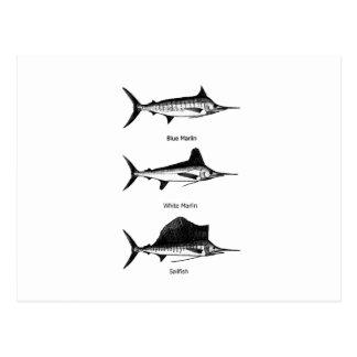 Aguja blanca - aguja azul - logotipo del pez tarjeta postal