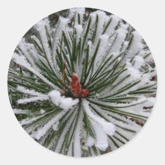 Agujas nevadas del pino pegatina redonda