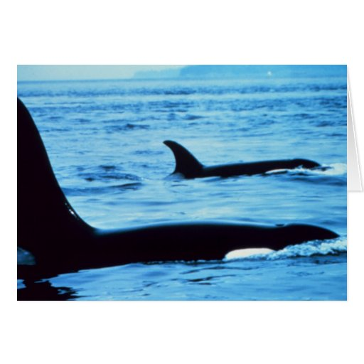 agujero del Tarjeta-soplo ballena-Toda Ocasión-noa Tarjeta De Felicitación