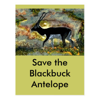ahorre el antílope Blackbuck - Junglewalk.com Tarjetas Postales