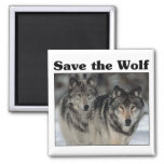 Ahorre el lobo imanes de nevera