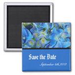 ahorre la fecha, flores azules del hydrangea imanes de nevera