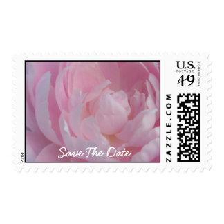 Ahorre la fecha pálida - los Peonies rosados que Sellos
