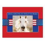 Ahorre las postales de los caballos salvajes de Am