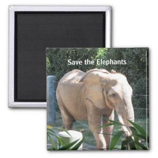 Ahorre los elefantes imán cuadrado