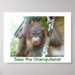 Ahorre los orangutanes posters