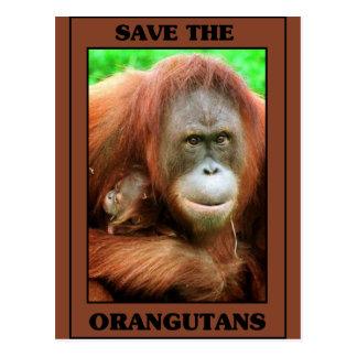 Ahorre los orangutanes tarjeta postal