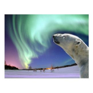 Ahorre los osos polares en peligro para el navidad tarjeta postal
