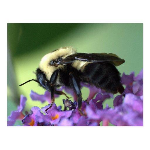 Ahorre nuestra postal de la abeja de la miel del p