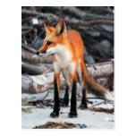 Ahorre nuestra postal del zorro rojo de la serie d