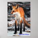 Ahorre nuestro poster del zorro rojo de la serie d