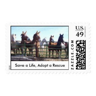 Ahorre una vida, adopte un rescate sellos