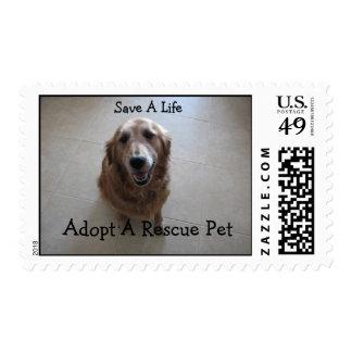 Ahorre una vida - rescate animal