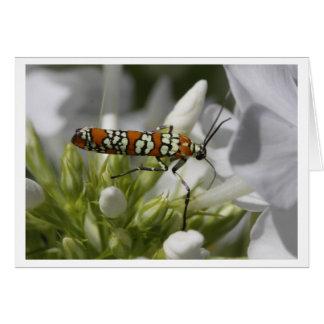 Ailanthus Webworm Moth Card