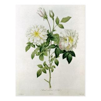 Aime Vibere  engraved by Eustache Hyacinthe Postcard