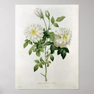 Aime Vibere grabado por Eustache Hyacinthe Posters