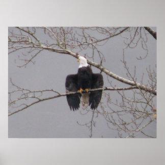 Air Dry Eagle Print